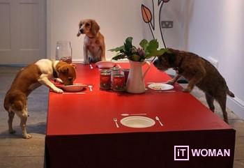 Ресторан только для собак