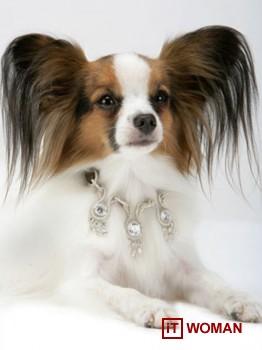 Самый дорогой ошейник для собачки за 3,2 млн. у.е.