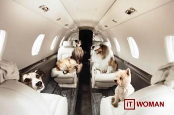 Собаки тоже летают первым классом