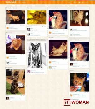 Социальная сеть для любителей котов Catmoji