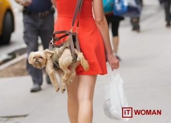 Собаки стали аксессуаром?